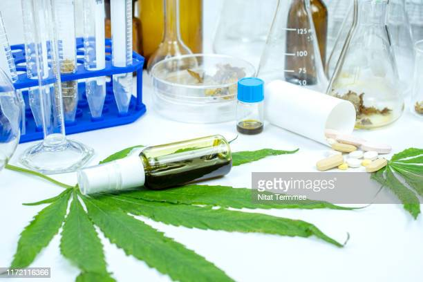 the oil obtained from the extraction of cannabis leaves. - marijuana leaf stock pictures, royalty-free photos & images