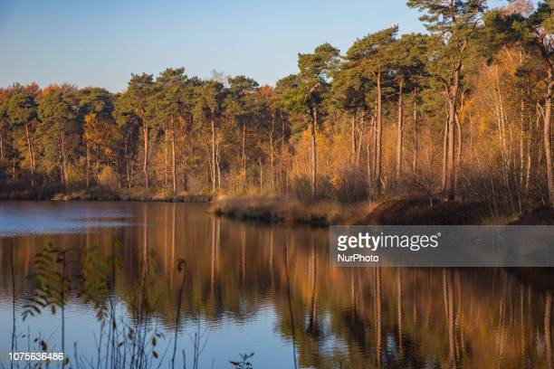 The Oisterwijk forests and fens in North Brabant in the Netherlands is a natural monument of forest and lakes with an extensive network of trekking...