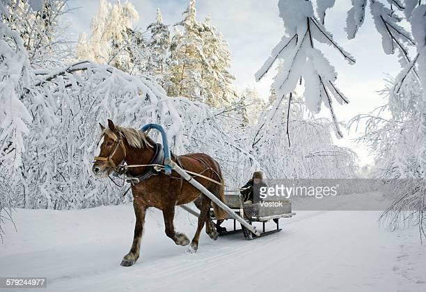 the old man in sledge - fédération de russie photos et images de collection