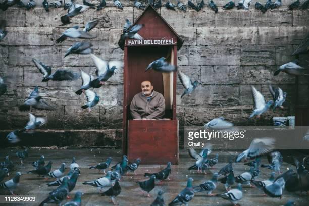 der alte mann verkauft weizenkorn um die tauben zu füttern - istanbul stock-fotos und bilder