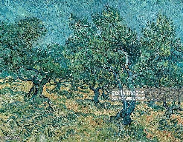 The olive grove by Vincent van Gogh Otterlo Rijksmuseum KrollerMuller