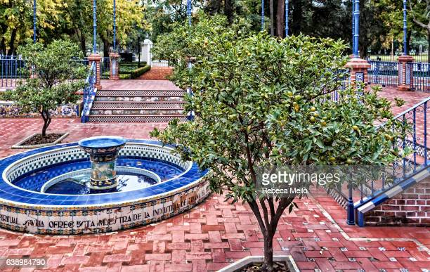 the olive tree in patio andalusian - palermo buenos aires stock photos and pictures