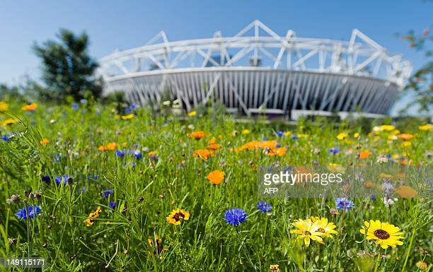 The Olympic Stadium is seen behind an area of blooming flowers within the Olympic Park on July 23 four days before the start of the 2012 London...