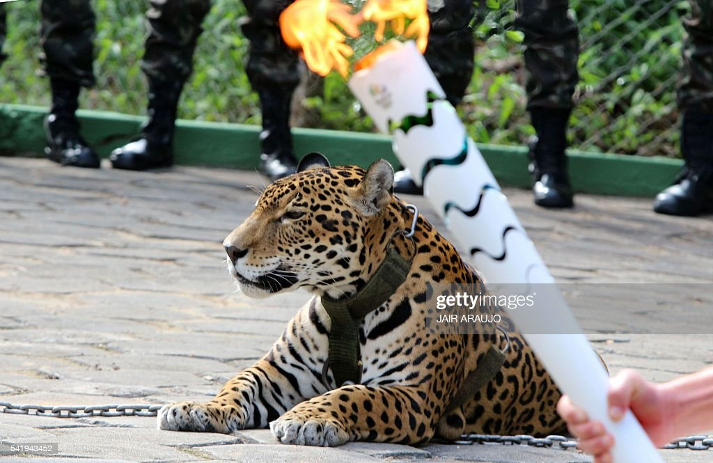 The Olympic Torch Hold By An Athlete Is Seen By A Jaguar Symbol
