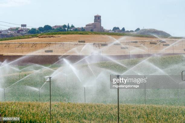 the onion field - sprinkler system stock pictures, royalty-free photos & images
