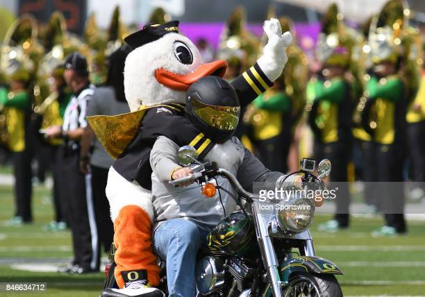 The Oregon Ducks mascot Puddles leads the team onto the field during a college football game between the Nebraska Cornhuskers and Oregon Ducks on...