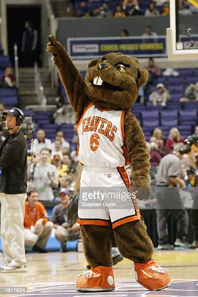 The Oregon State Beaver mascot cheers on the court during the Pac 10 tournament against California on March 13 2003 at the Staples Center in Los...