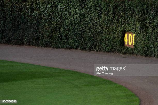The outfield wall ivy is seen prior to Game 5 of the National League Championship Series between the Los Angeles Dodgers and the Chicago Cubs at...