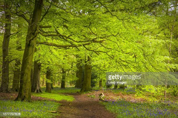 The Outwoods are110 acres of ancient woodland on the edge of Charnwood Forest.