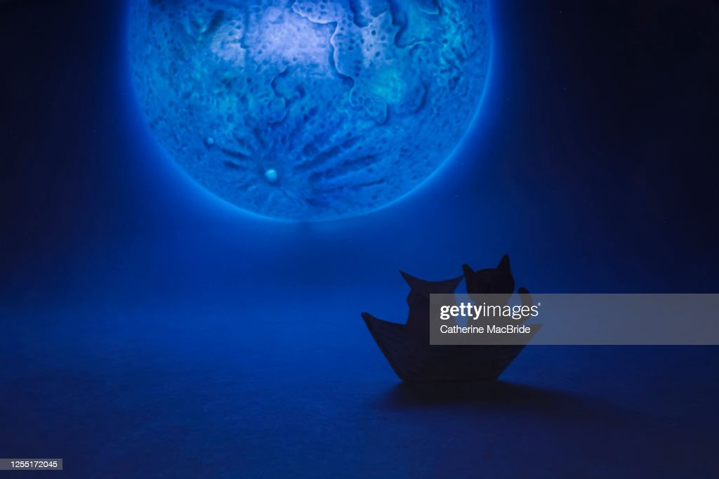 The Owl and The Pussy Cat went to Sea : Stock Photo
