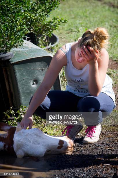 The owner of a cow which drowned in floodwaters caused by Cyclone Debbie cries after the recovery effort to rescue it in North MacLean Brisbane on...