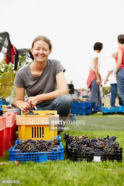 The owner of a vineyard, businesswoman and founder kneeling by the crates of harvested grapes at the end of the picking day.