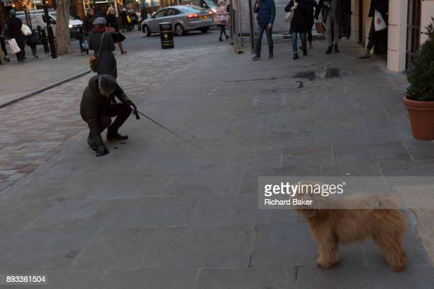 The owner of his pet Cockapoo dog picks up its 'poo' from the pavement in Seven Dials near Covent Garden on 12th December 2017 in London England