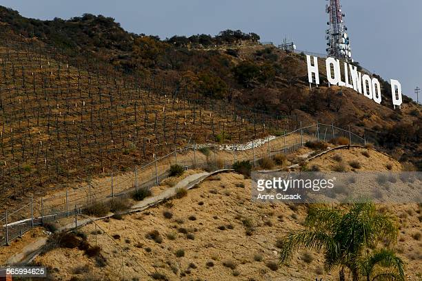 The owner of the vineyard west of the Hollywood sign wants to build a huge estate next to the vineyard above Innsdale Drive in Hollywood on January 6...