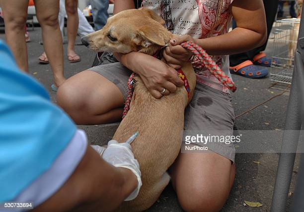 The owners embrace animal pet dog turn in the queue given rabies vaccine in the residential area in East Jakarta May 11 2016 The department of animal...