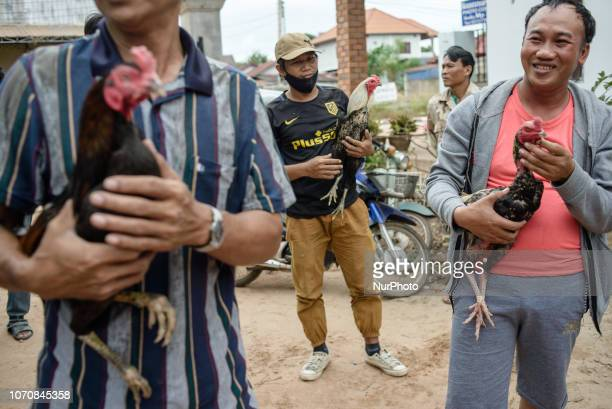 The owners prepare the fighting roosters for the next battle during traditional cockfighting in a village near Vientiane Laos on December 9 2018