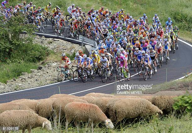 The pack passes sheep during the seventh stage of 91st Giro between Vasto and Pescocostanzo on May 16 2008 Italian rider Gabriele Bosisio won the...