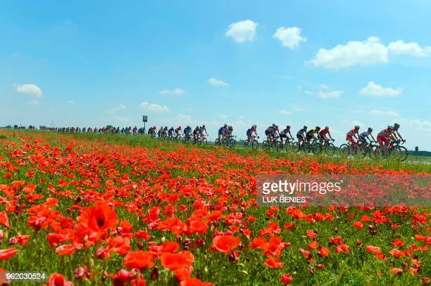The pack rides along a field of poppies during the 18th stage between Abbiategrasso and Prato Nevoso during the 101st Giro d'Italia, Tour of Italy...