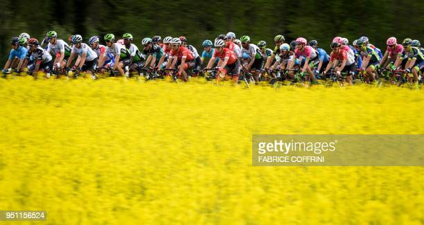 The pack rides past a rapeseed field during the 166,6 km first stage between Fribourg and Delemont as part of the Tour de Romandie UCI Pro cycling...