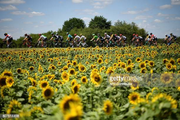 The pack rides past a sunflowers field during the 2075 km fourth stage of the 104th edition of the Tour de France cycling race on July 4 2017 between...