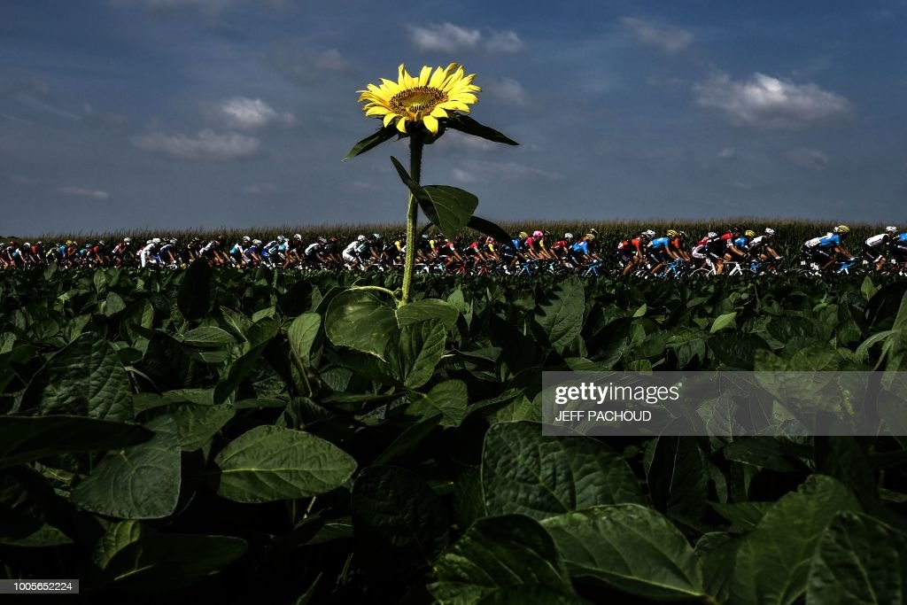 TOPSHOT - The pack rides through sunflower fields during the 18th stage of the 105th edition of the Tour de France cycling race, on July 26, 2018 between Trie-sur-Baise and Pau, southwestern France.