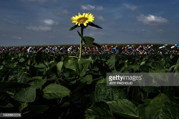 TOPSHOT The pack rides through sunflower fields during the 18th stage of the 105th edition of the Tour de France cycling race on July 26 2018 between...