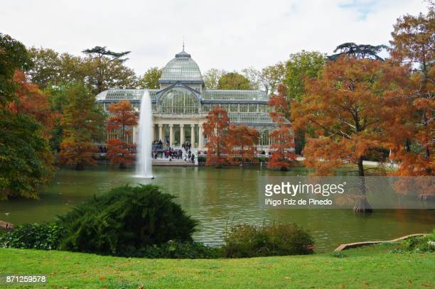 the palacio de cristal in autumn - the cristal palace- madrid - spain - bald cypress tree stock photos and pictures