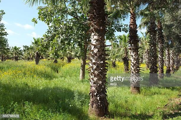 The palm grove in Spring