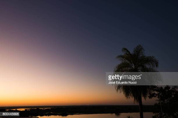 the palm - silhueta stock photos and pictures