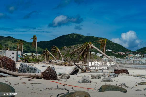 The palm trees along the beaches are devastated they could not resist the power of Hurricane Irma on November 15 SaintMartin French Antilles Several...