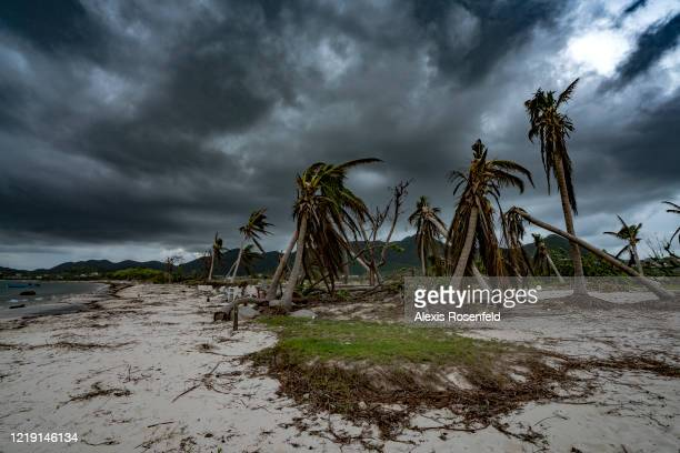 The palm trees on the beaches are devastated they could not resist the power of Hurricane Irma on November 08 SaintMartin French Antilles Several...