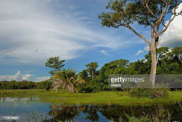 the pantanal - mato grosso state stock pictures, royalty-free photos & images