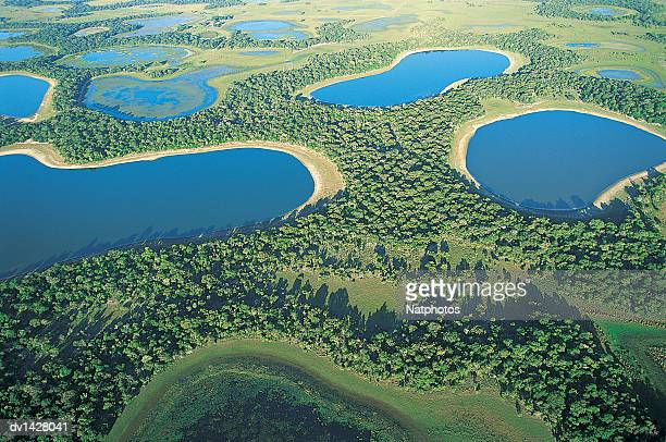 The Pantanal Wetlands, Brazil