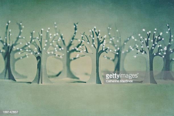 the paper forest... - catherine macbride foto e immagini stock
