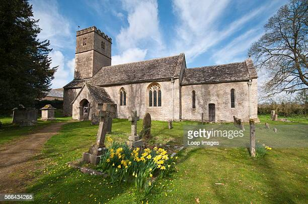 The Parish Church of St Andrew with daffodils in the churchyard in the Cotswold village of Coln Rogers.