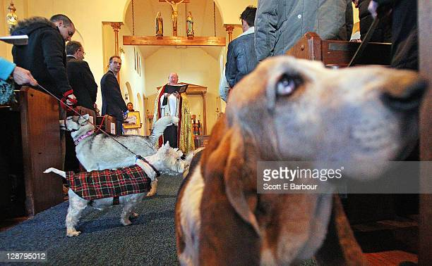 The Parish Priest Father Roger Kelly OGS conducts a service as animals stand in the altar during The 18th Annual Blessing of Animals at St James the...