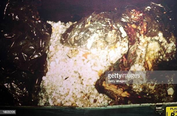 The partial remains of murder victim Holly Maddux found in a trunk are shown in this 1979 file photo Her boyfriend Ira Einhorn was convicted of her...
