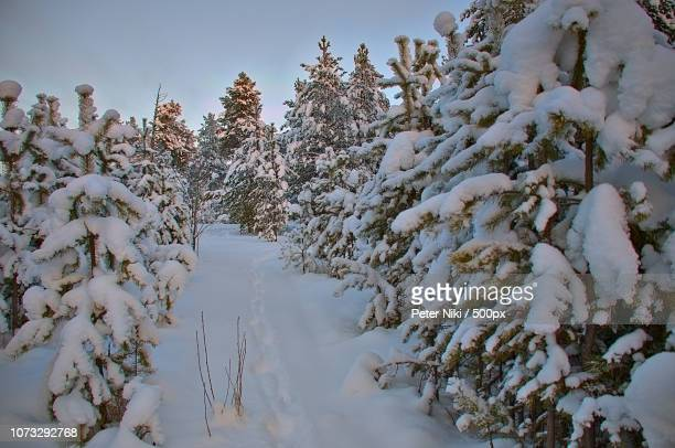 the path in the snow - peter snow stock pictures, royalty-free photos & images