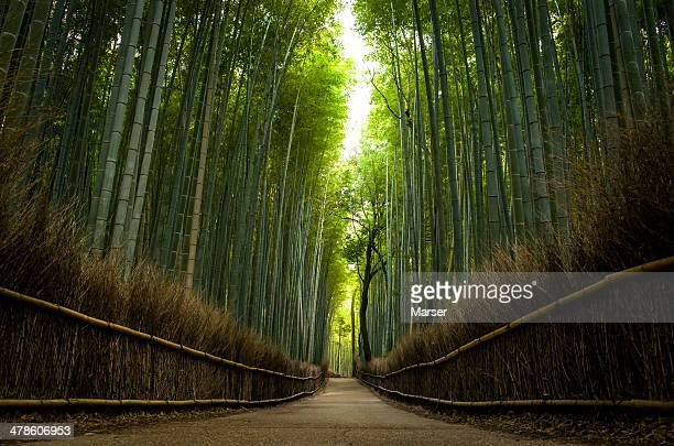 the path of bamboo - bamboo forest stock photos and pictures