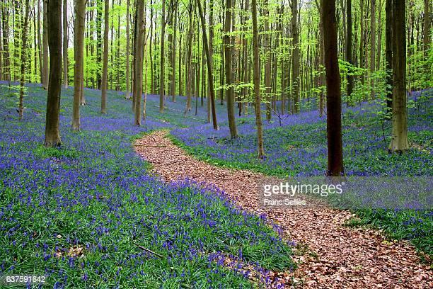 The path through the fairytale forest