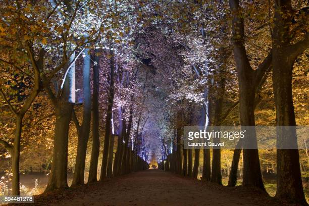 The path to the Château de Chenonceau surrounded by trees at night