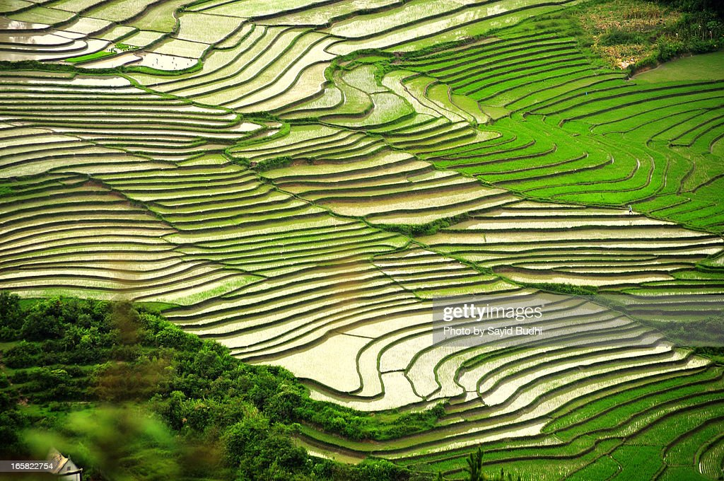 Aerial view of the pattern of Paddy Fields terrace, taken from Dolok Tolong hill, Balige, North Sumatra