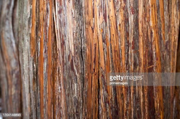 el patrón de textura de árbol y fondo del tronco. - árbol de hoja caduca fotografías e imágenes de stock