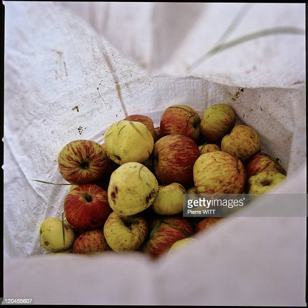 """The Pays De Gavot In France - Culs cousus, """"francs roseaux"""", """"cresons"""", so many apple variety to produce the famous cider of pays de Gavot."""