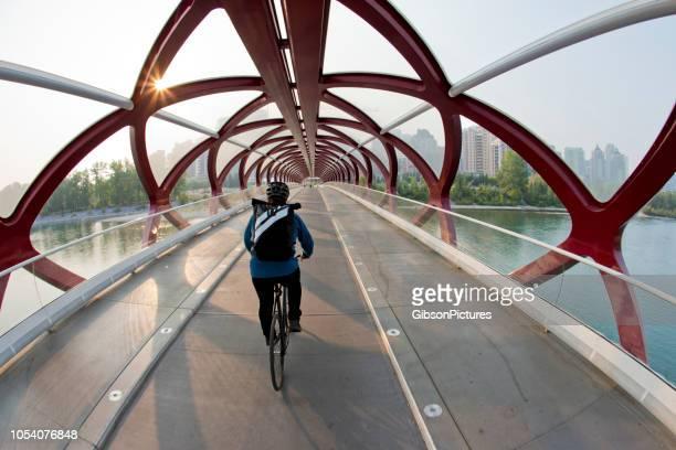 the peace bridge in calgary, alberta, canada - calgary alberta stock pictures, royalty-free photos & images