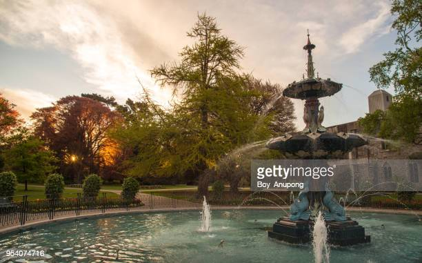 the peacock fountain during the sunset in christchurch botanic gardens, new zealand. - christchurch stock pictures, royalty-free photos & images