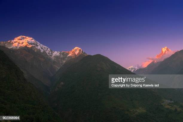 The peak of Annapurna South, Hinchuli and Machhapuchhre during the evening twilight time in Chhomrong.