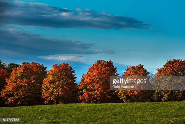 The peak of fall color season in New England, yellow, orange and red Maple trees dazzle the eye!