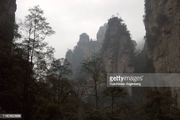 the peaks of wulingyuan, world of pandora planet, hunan, china - pandora peaks stock photos and pictures