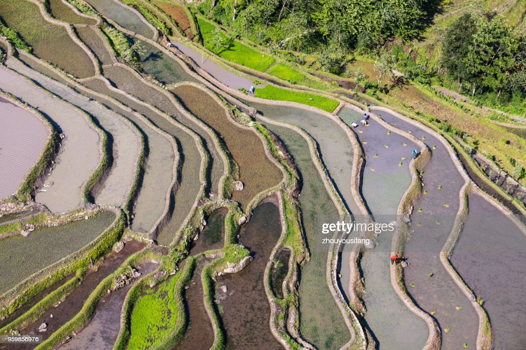 The peasants are working in the terraced fields : Stock-Foto
